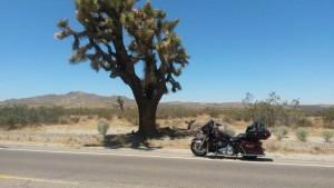 Eagle Adventure Tours - Harley Tour Route 66 Chicago - L.A (73)